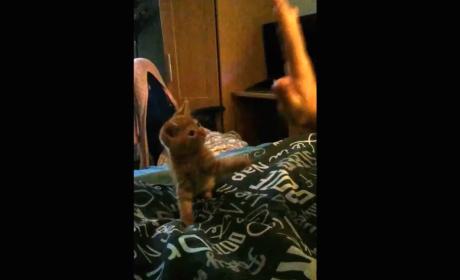Kitten Gives Noble High-Five Effort, Topples Right Over