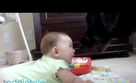 Dog Makes Baby Laugh... A LOT