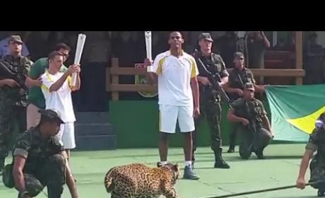 Amazon Jaguar Shot & Killed After Olympic Torch Ceremony: Who's to Blame?