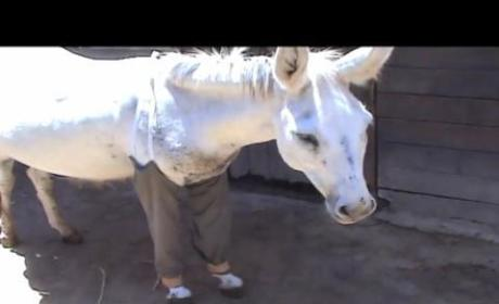 Donkey Wears Pants in Israel