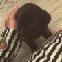 Justin Bieber Adopts a Puppy!!!
