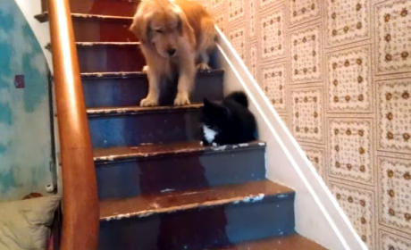 Petrified Dog Refuses to Go Down Stairs: Move That Cat!!!
