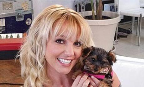 Britney Spears Shows Off Smallest, Cutest Fan: Hannah the Dog!