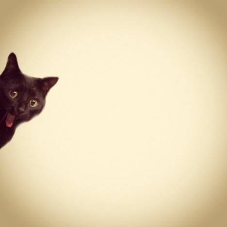 Minimalist Cat