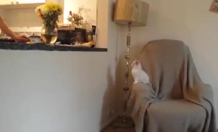 Cat Jumps, Fails to Land on Kitchen Counter