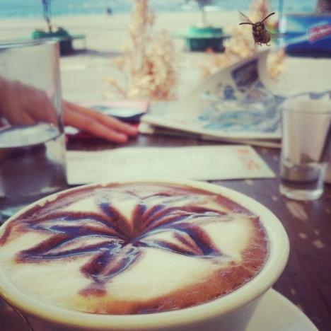Coffee Bee Photobomb