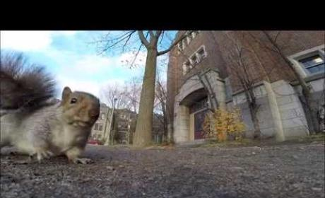Squirrel Steals GoPro, Drops It from Tree
