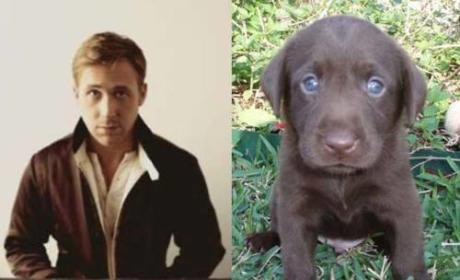 Ryan Gosling vs. Puppy