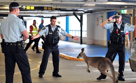 Kangaroo Loose in Australian Airport: Check Out the Photo!