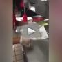 Checkers Employee Smears Bun on Floor, Uses It for Hamburger