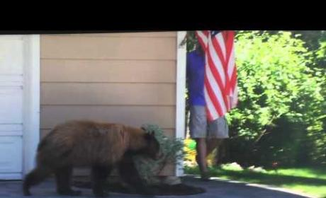 Bear and Man Scare Heck Out of Each Other: WATCH!