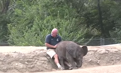 Baby Elephant Sits on Man's Lap, Doesn't Realize He's an Elephant