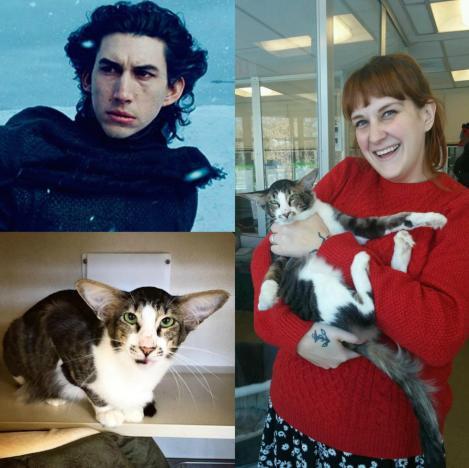 Adopted Cat