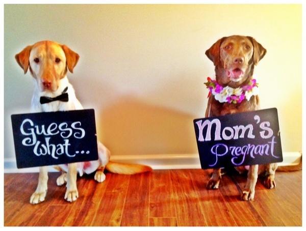 Mom's Pregnant!