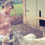 Taylor Swift and Sheep