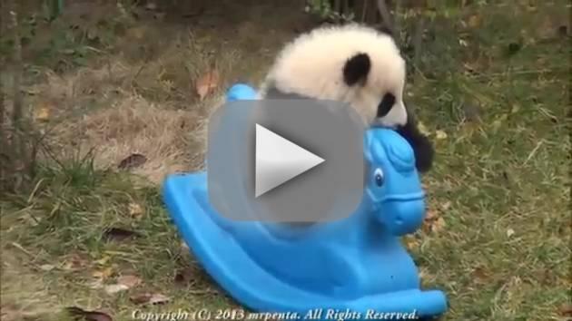 Panda Rides Pony: So Cute!