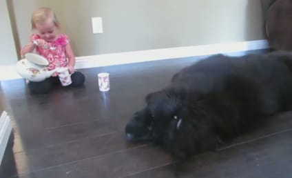 Bored Dog Hates Tea Party, Clashes with Young Owner Over Crumpets