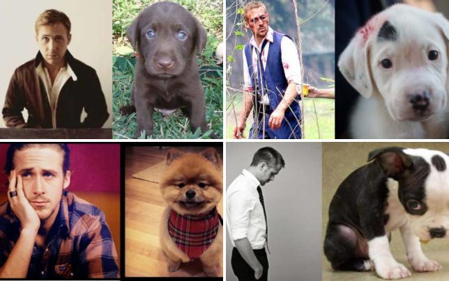 Ryan gosling vs puppy