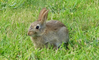 Man Killed Moving a Rabbit in Wyoming