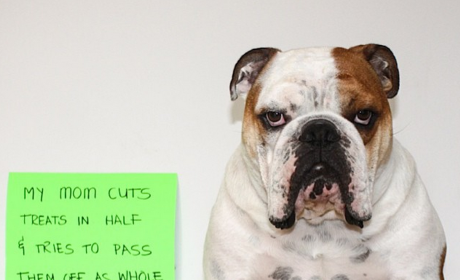 17 Bulldogs Who Are All About #OwnerShaming: They Smelt It AND Dealt It!