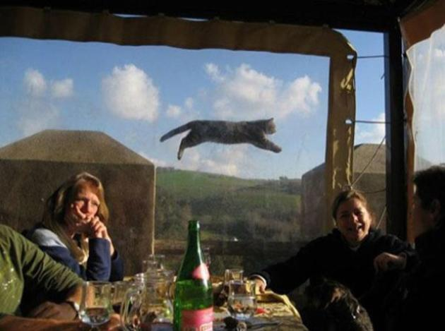 Crazy Cat Photobomb