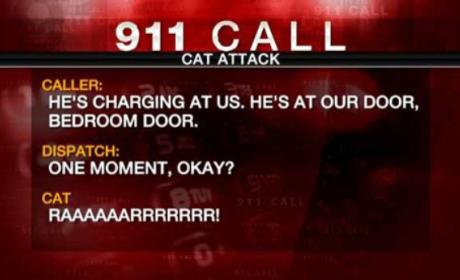 Family Calls 911 Over Ferocious Feline: He's Charging Us!