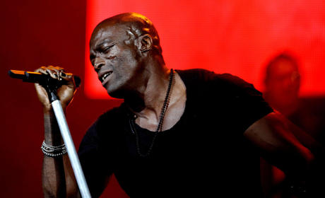 Seal at the Palms