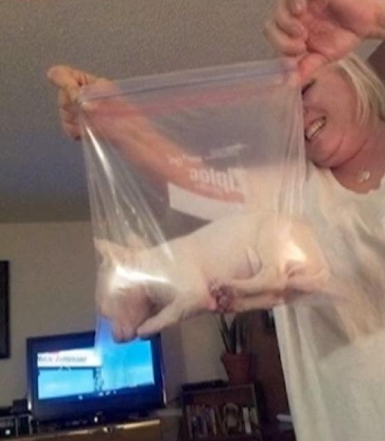 Woman Puts Puppy in Bag