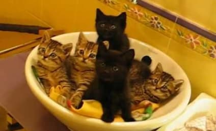 Synchronized Kittens Are So Adorable. You HAVE TO See This.