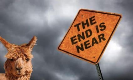 Alpacalypse 2012: Doomsday Never Looked So Cute!