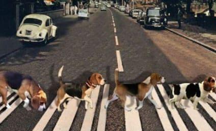 #DogBands Go Viral, Crack Up Internet: Meet The Beagles!