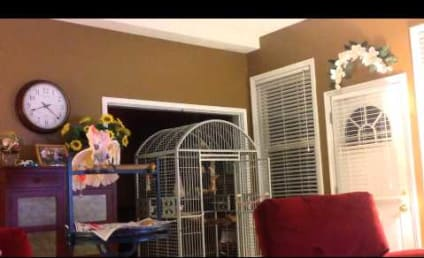 Amazing Cockatoo Mimics Ex-Owners INTENSE Fights: Watch, Listen Now!