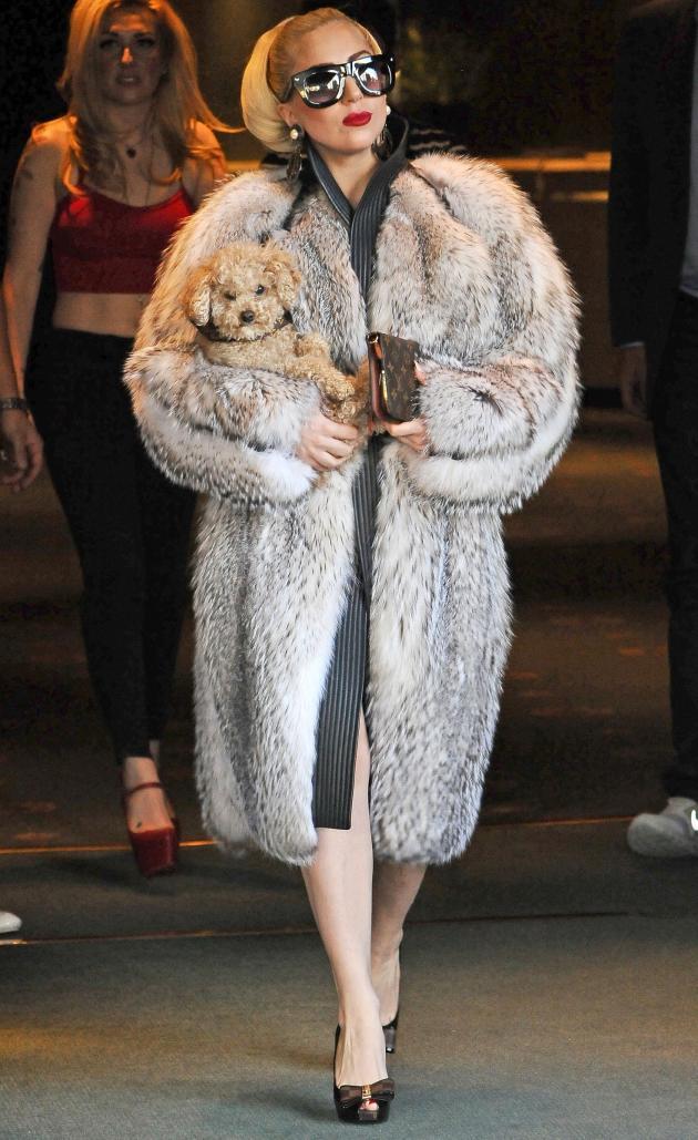 Lady Gaga Fur