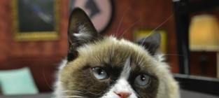 Grumpy Cat: Rollin' Like a BALLER at SXSW!