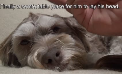 Stray Dog Awoken from Sleep: Watch His Dreams Come True