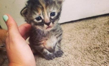 Purrmanently Sad Cat Goes Viral, Bums Out the Internet