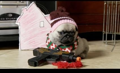 Home Alone, As Told By Adorable Pug Puppies