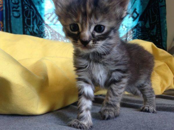 Purrmanently Sad Cat Photo