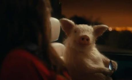 GEICO Accused of Promoting Bestiality By Moms Group