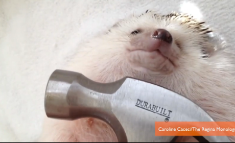 "Hedgehog Recreates Miley Cyrus ""Wrecking Ball"" Video: Watch Now!"