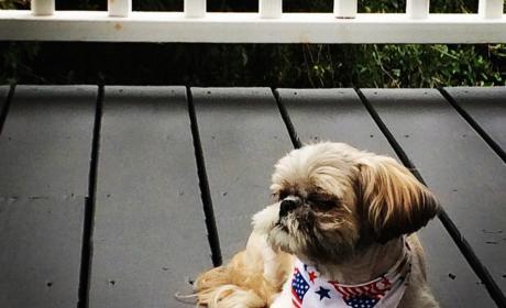 Kerry Washington's Dog