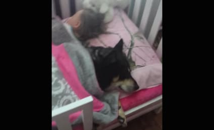 Dog Curls Up Next to Sleeping Baby, Deserves ALL the Affection