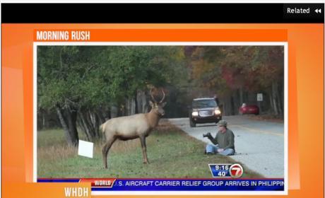 Elk Nudges Photographer for 7 Minutes