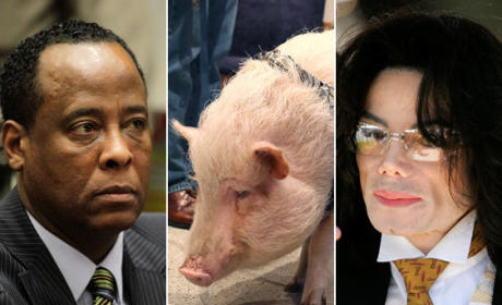Dr. Conrad Murray Wants to Give a Pig Propofol