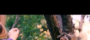 Killer Squirrels Movie: Actually Coming Soon!