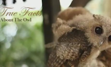 True Facts About Owls: What a Hoot!