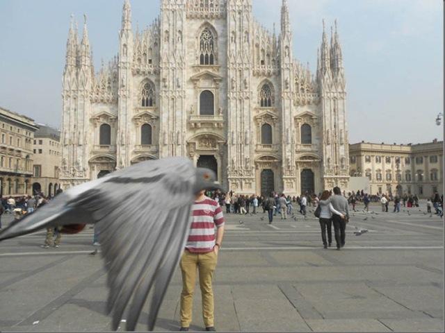 Pigeon Photobomb
