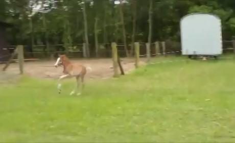 Excitied Baby Horse Runs Smack Dab Into Much Bigger Horse: OUCH!
