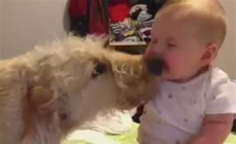 Dog Knocks Baby Over With Kisses