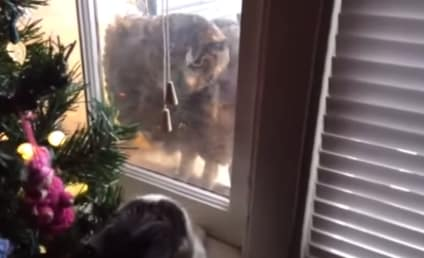 Watch This Cat Defend His Home Against an Angry Owl